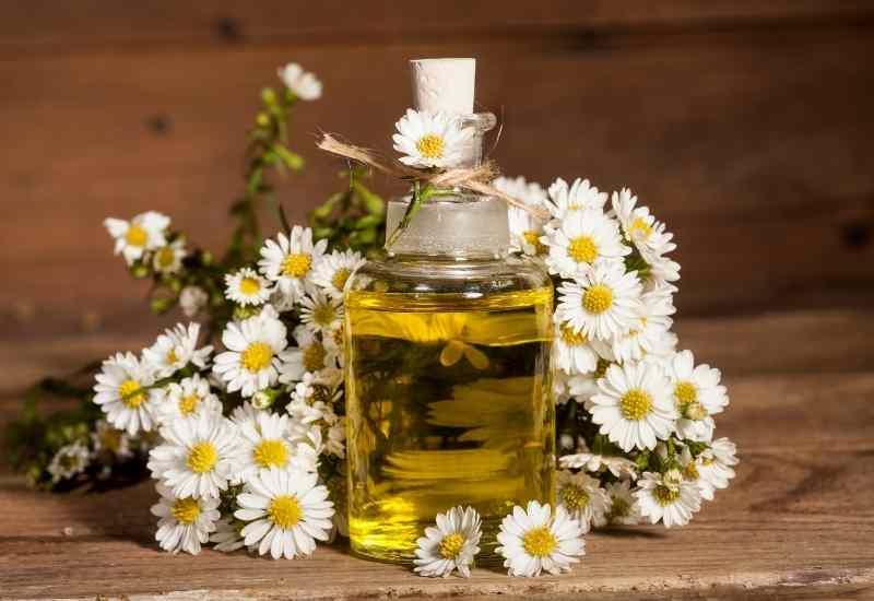 Chamomile Essential Oils for depression