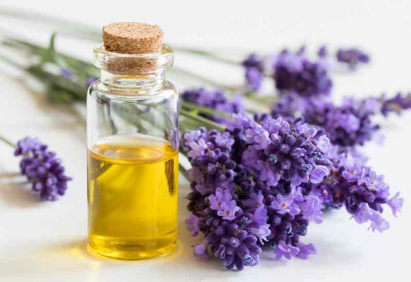 lavender essential oils for depression